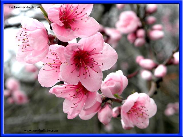 La Flore Br En Cote D Or Br 21
