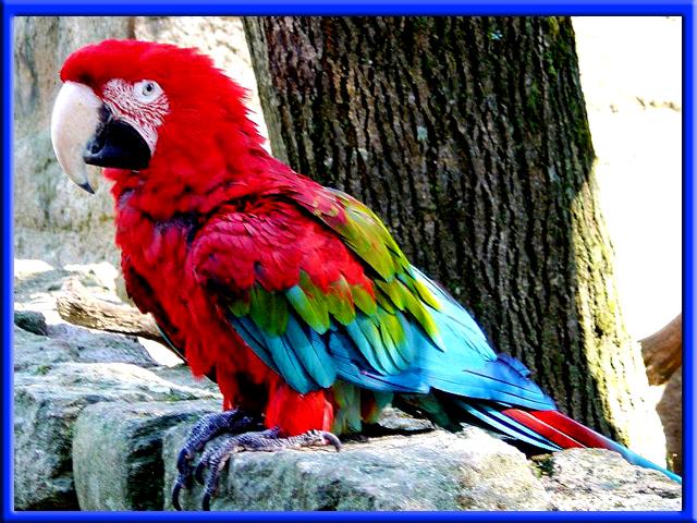 Jardin d oiseaux exotiques la londe les maures france pictures to pin on pinterest - Jardin des oiseaux la londe ...