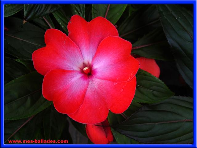 Les fleurs au printemps a jardiland a cormontreuil dans la marne 51350 - Jardiland pot de fleur ...