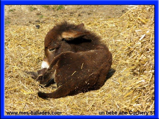 Le parc des aulnes 2009 a cuchery 51480 - Bebe de l ane ...