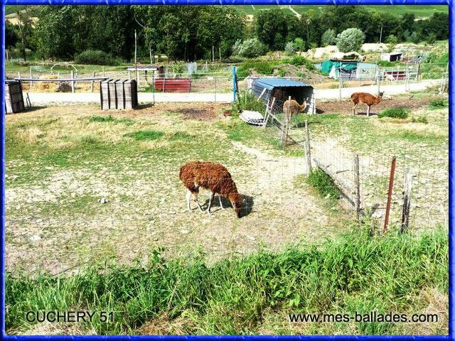 Le parc animalier des aulnes a cuchery for Parc animalier dans les yvelines