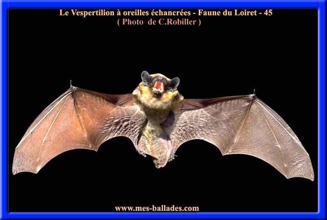 La faune du loiret 45 en region centre val de loire for Region du loiret