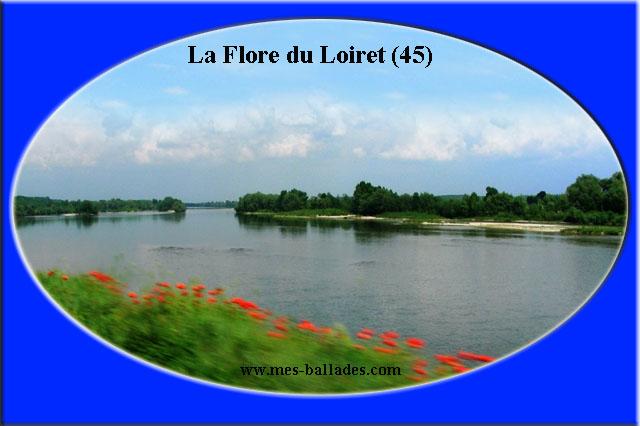 La flore du loiret 45 for Region loiret